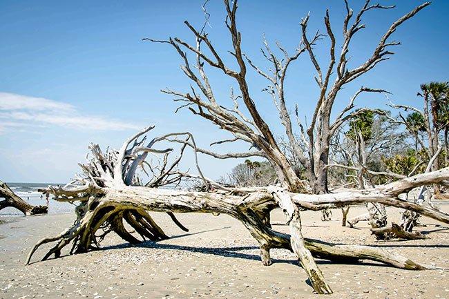 Boneyard Beach at Botany Bay