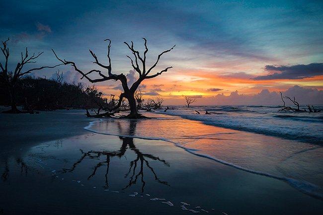 Boneyard Beach, Bull's Island, Cape Romain