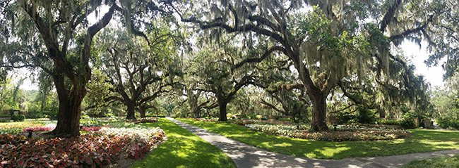 Brookgreen Gardens Panoramic