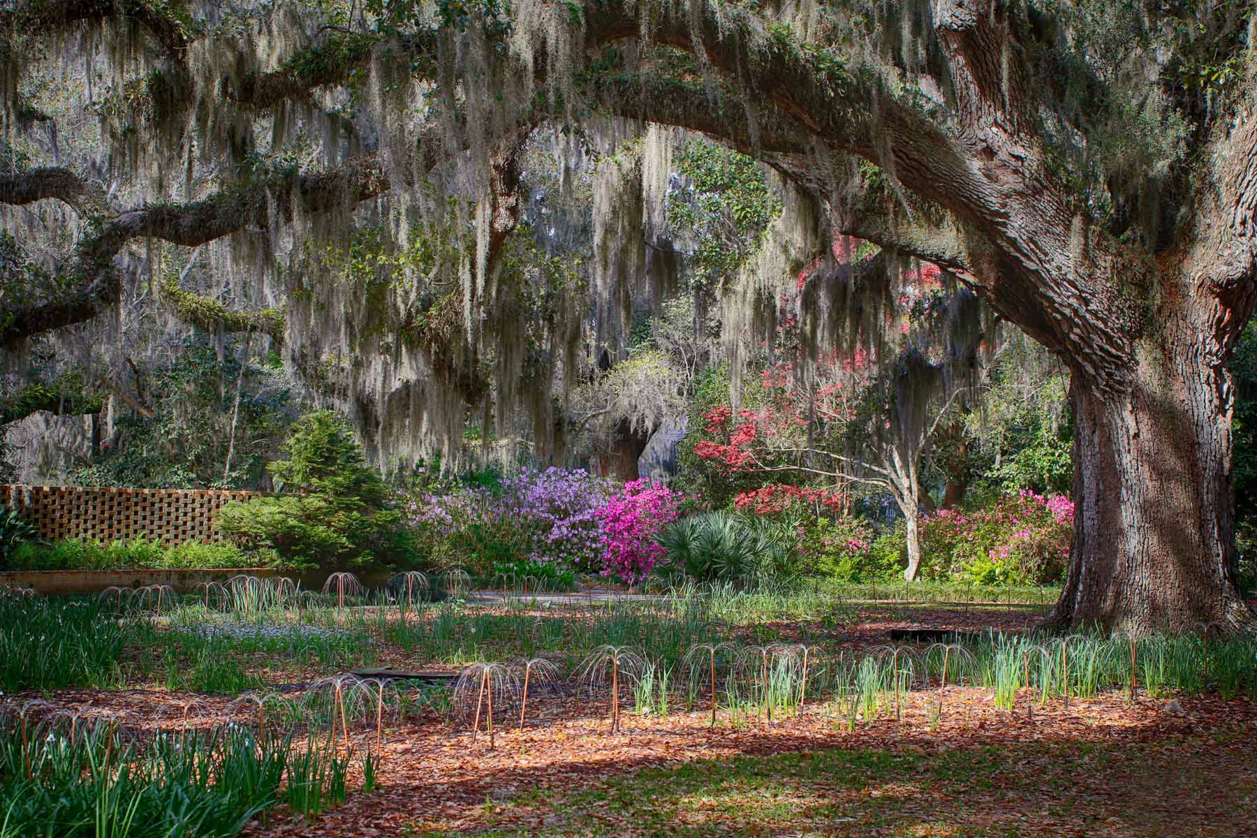 Brookgreen Gardens in the South Carolina Springtime