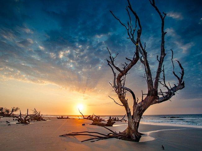 Cape Romain Bulls Island