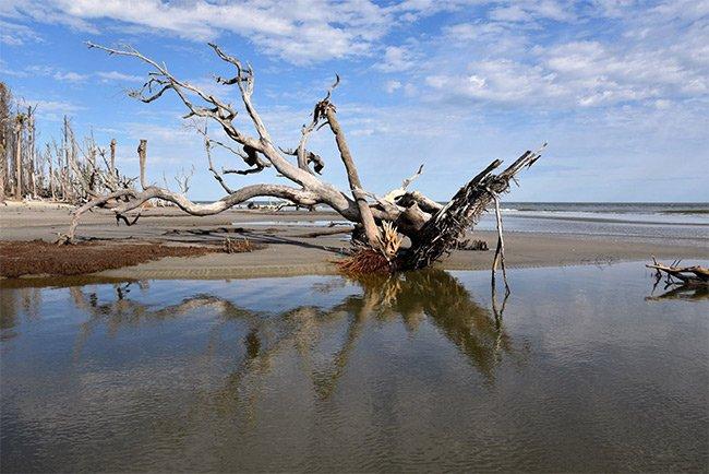 Capers Island Boneyard Reflection