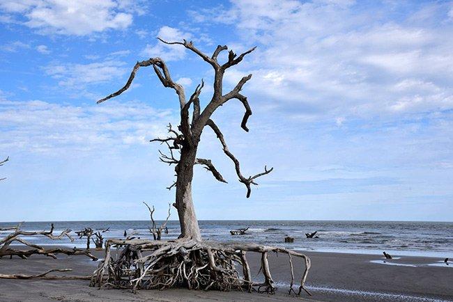 Capers Island Boneyard
