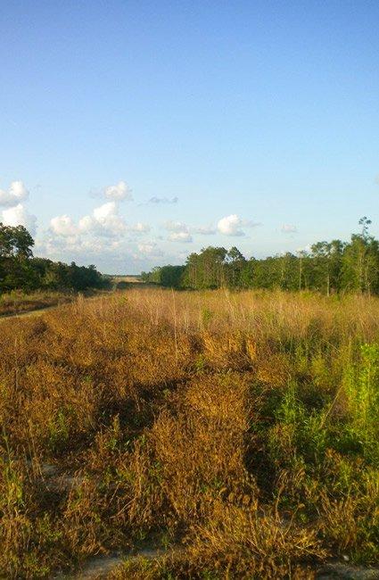 Carolina Bay Parkway