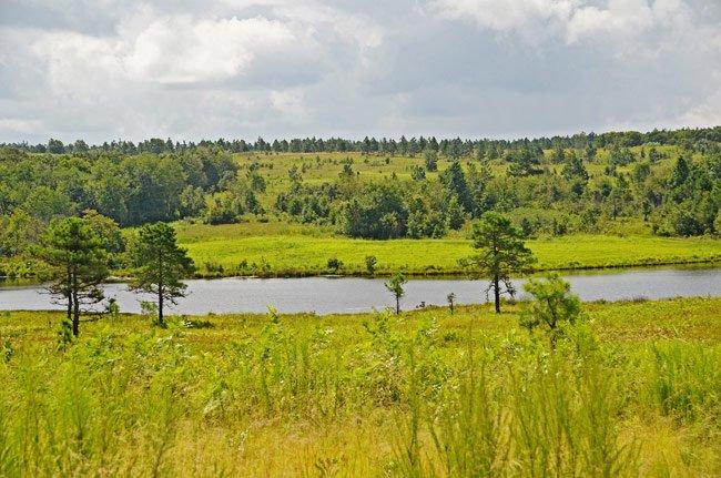 Carolina Sandhills Wildlife Refuge