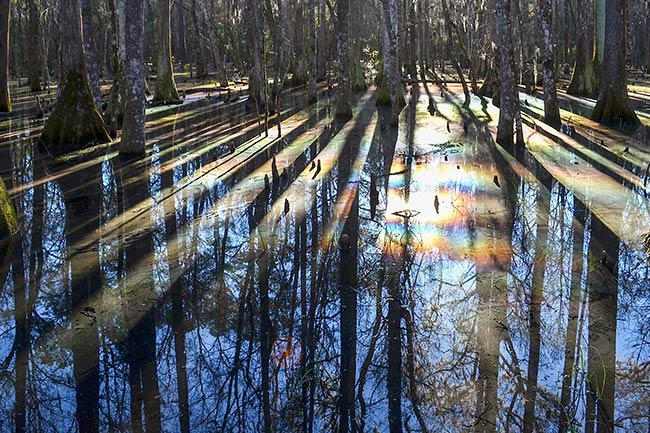 Caw Caw Rainbow Swamp