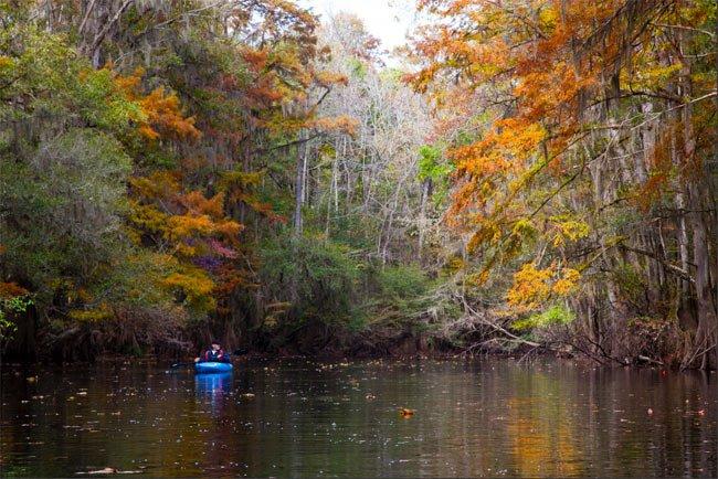 Cedar Creek in Congaree National Park