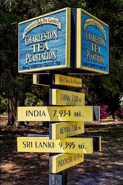 Charleston Tea Plantation Signpost