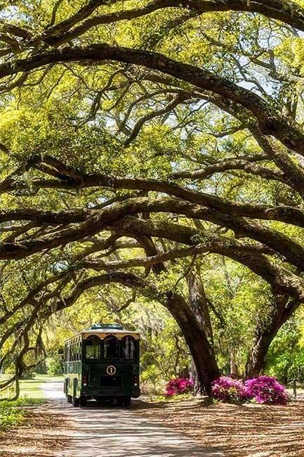 Charleston Tea Plantation Trolley