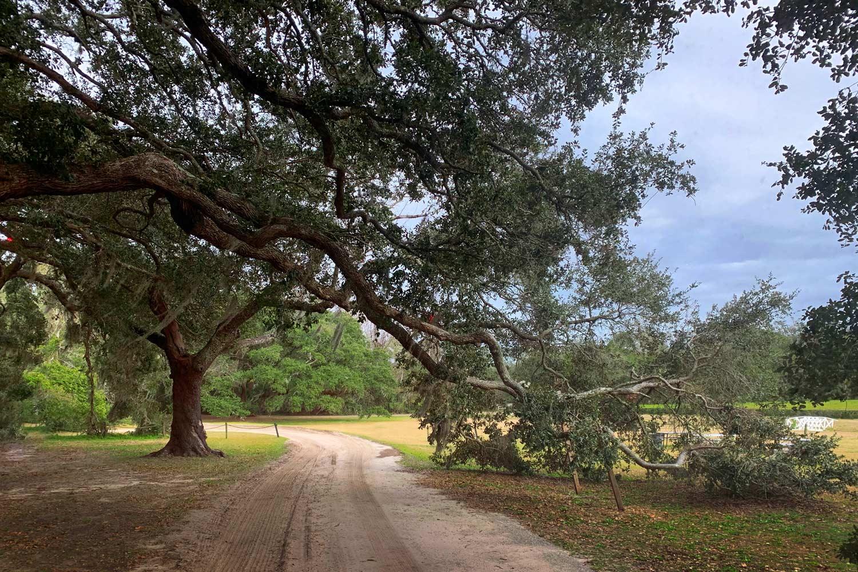 Charleston Tea Plantation, Wadmalaw, SC