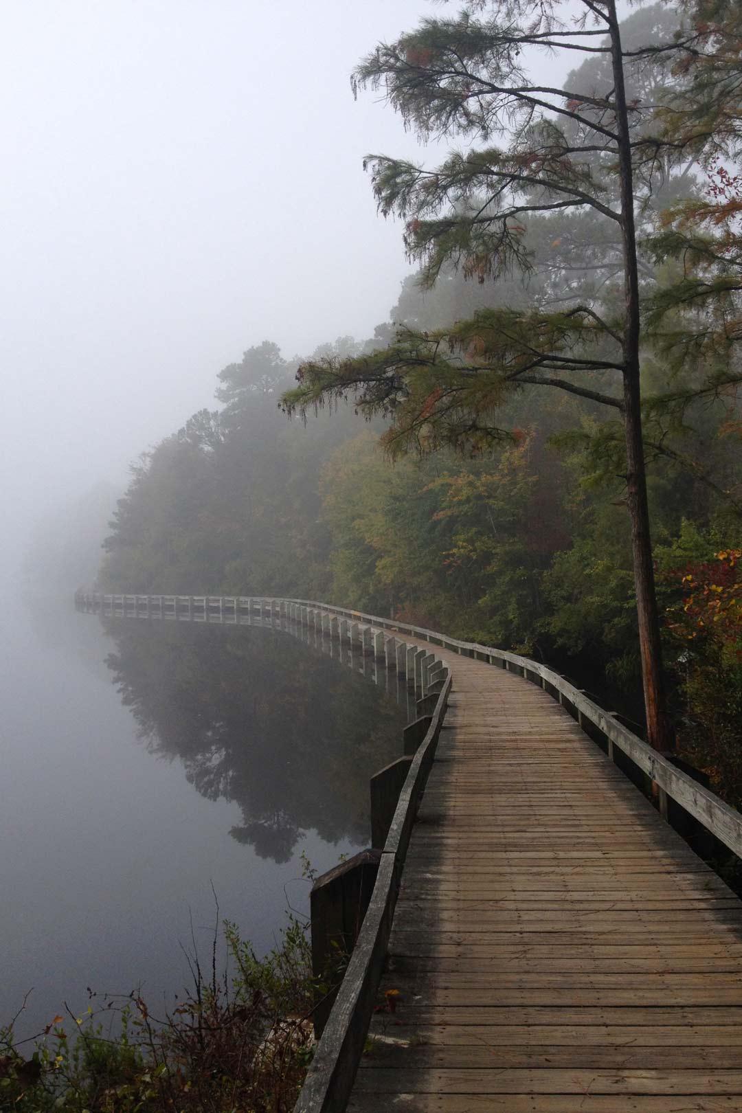 Cheraw State Park, Longleaf Pine