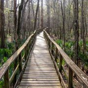 Congaree Creek Trail