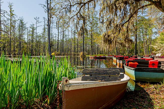 Cypress Gardens Canoes
