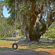 Deerhead Oak