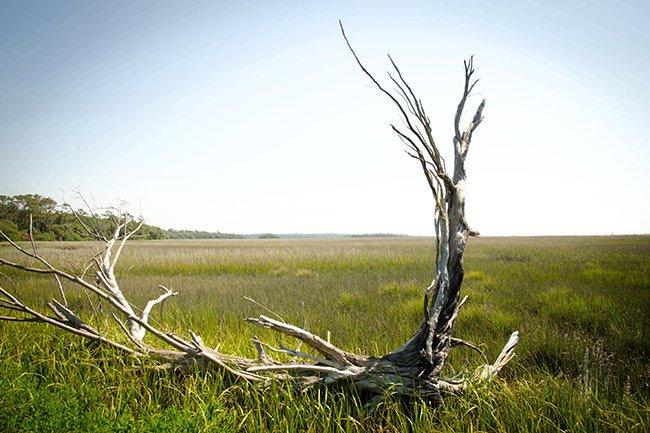 Driftwood, Botany Bay