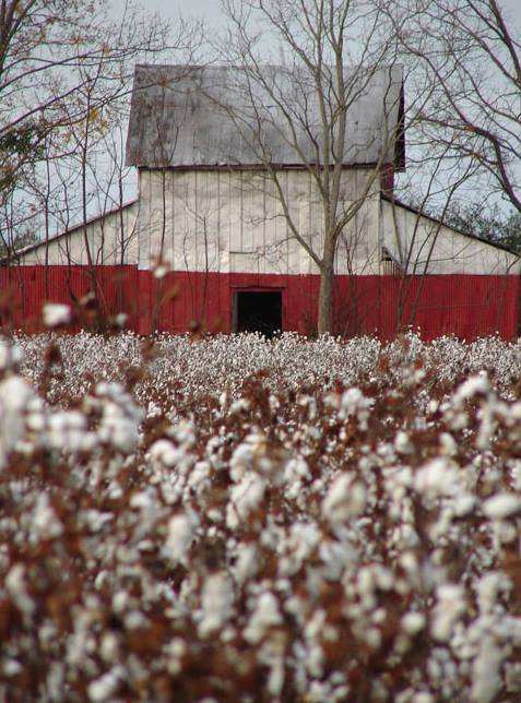 Edgefield Cotton Barn