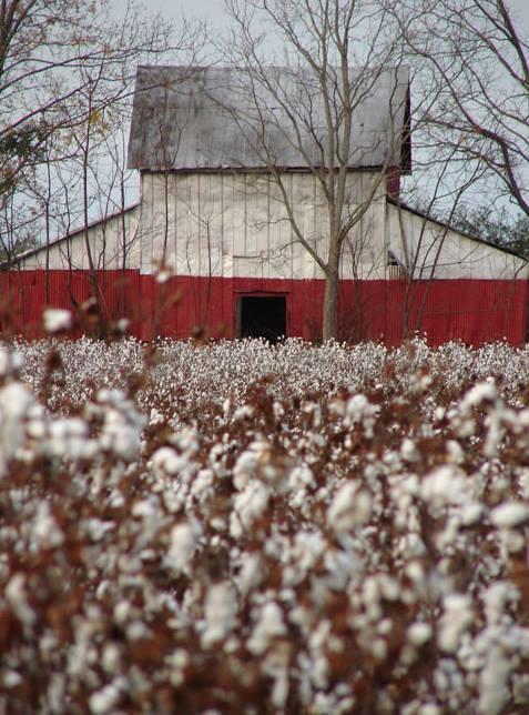 Edgefield Cotton Barn