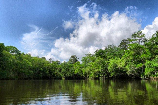 Edisto Green Pond