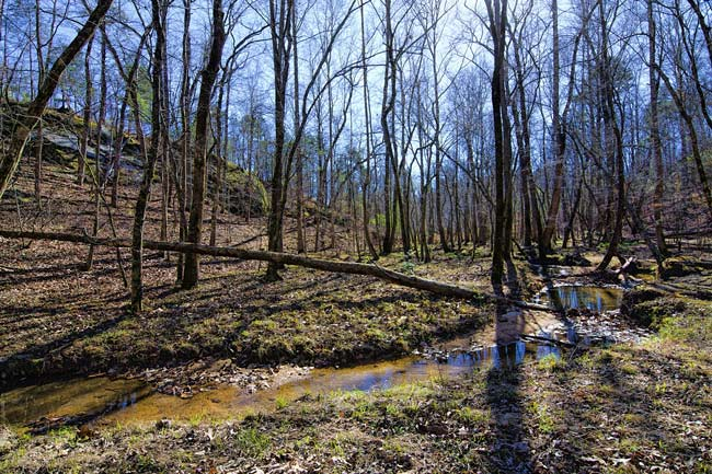 Forty Acre Heritage Preserve