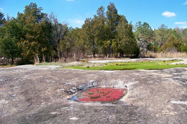 Forty Acre Rock Spring