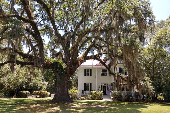 Frampton Plantation Under Oaks