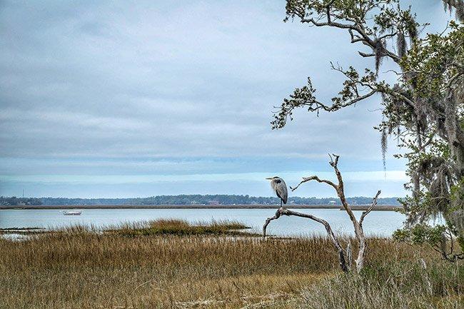 Hilton Head Island Egret