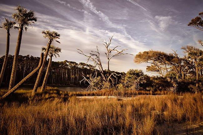 Hunting Island Marsh Scene