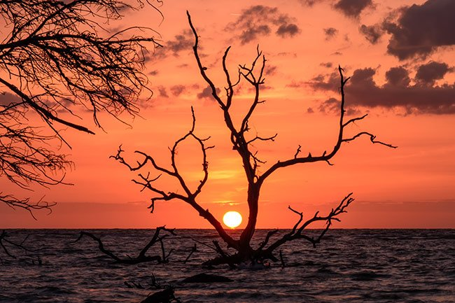 Hunting Island Tree at Sunset