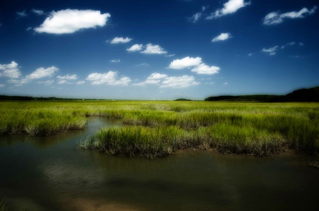 Huntington Beach Salt Marsh