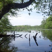 Lake Cunningham Greer