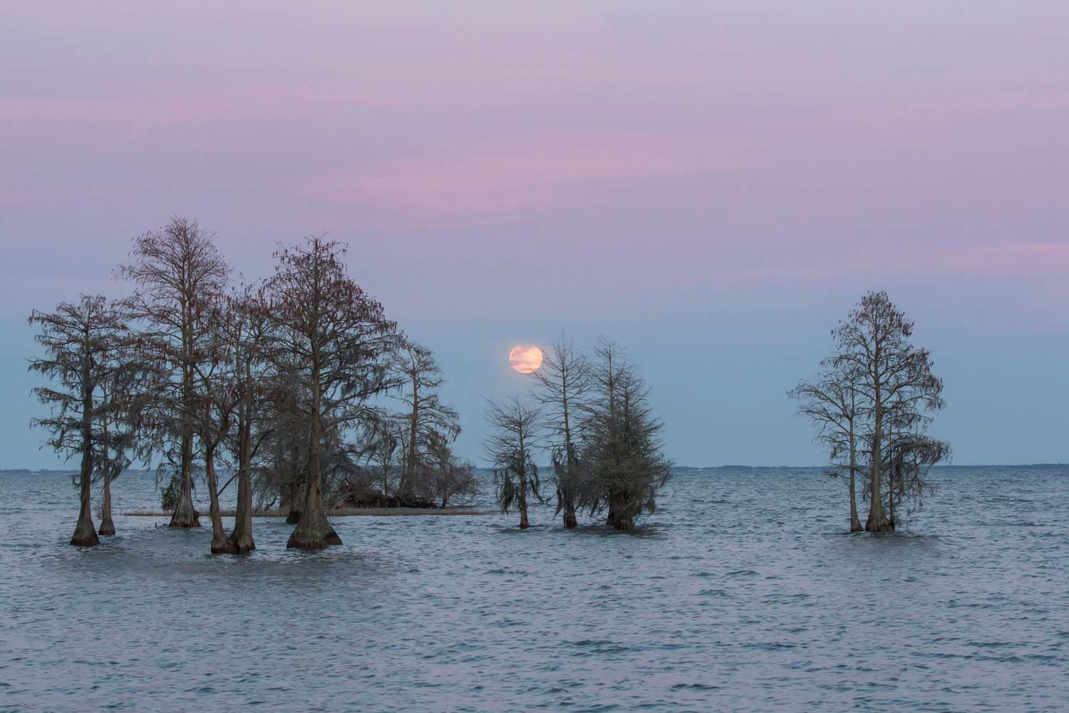 Lake Moultrie Cypress Bank