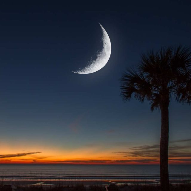 Palmetto Tree and Moon on SC State Flag