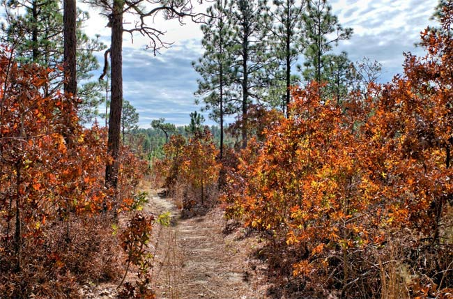 Peachtree Rock Trail