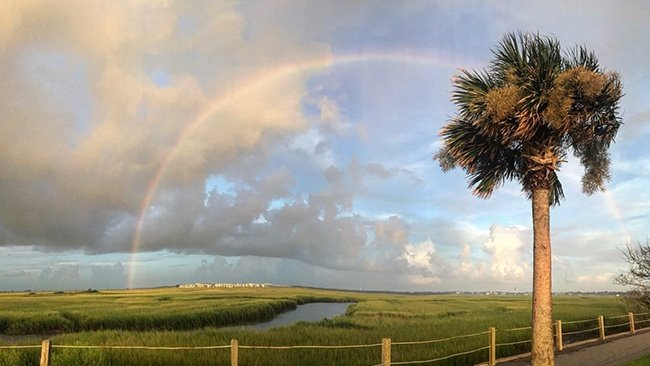 Pitt Street Bridge with Rainbow and Palmetto