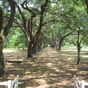 Roseland Plantation