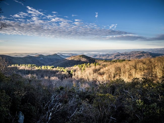Sassafras View