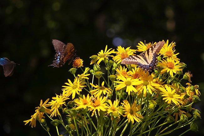 South Carolina Botanical Gardens