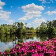 Swan Lake Sumter