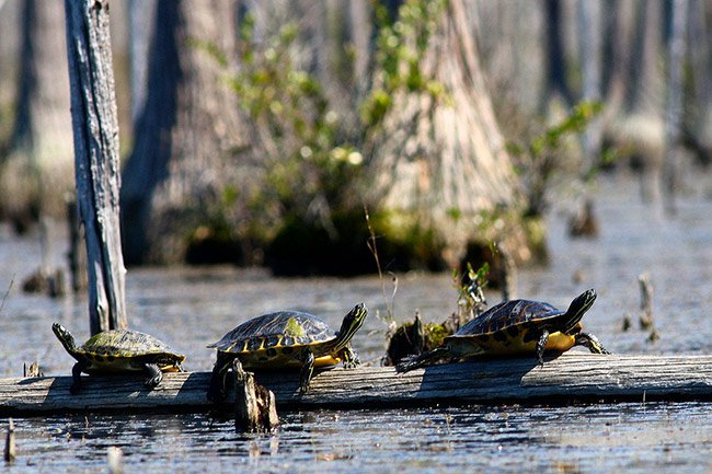 Turtles, Goodale State Park