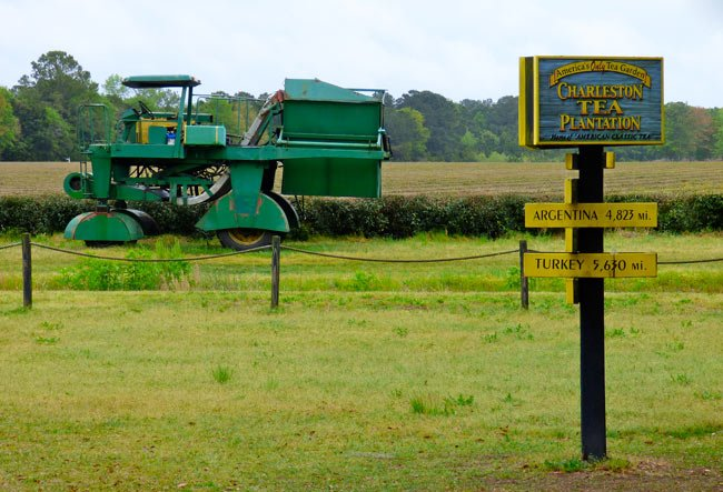 Tea Plantation Harvester