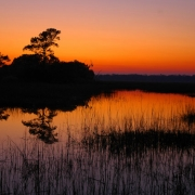 Wadmalaw Island, South Carolina