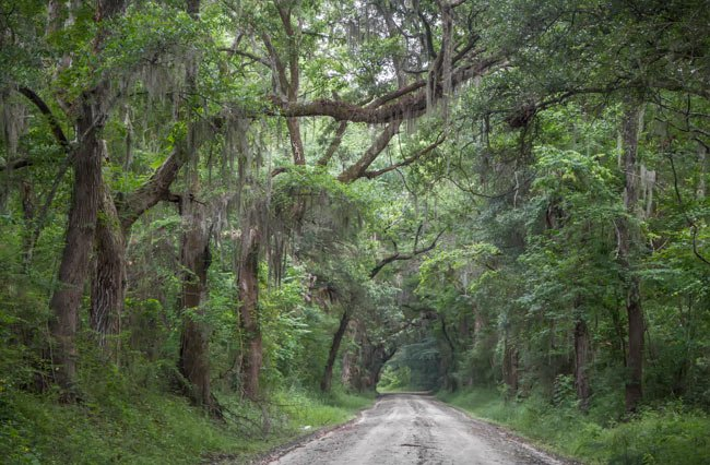 Wescott Road on Edisto Island