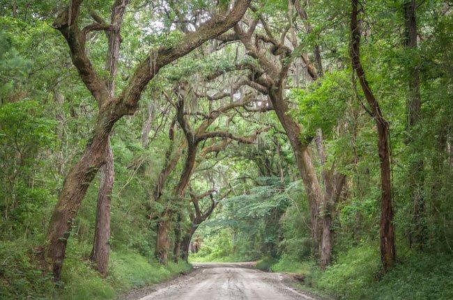 Wescott Road