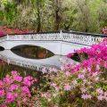 White Bridge at Magnolia Plantation