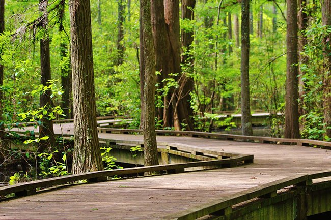 Woods Bay State Park Boardwalk